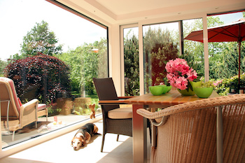 dog in a conservatory